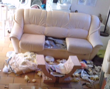 canape-chien-destruction