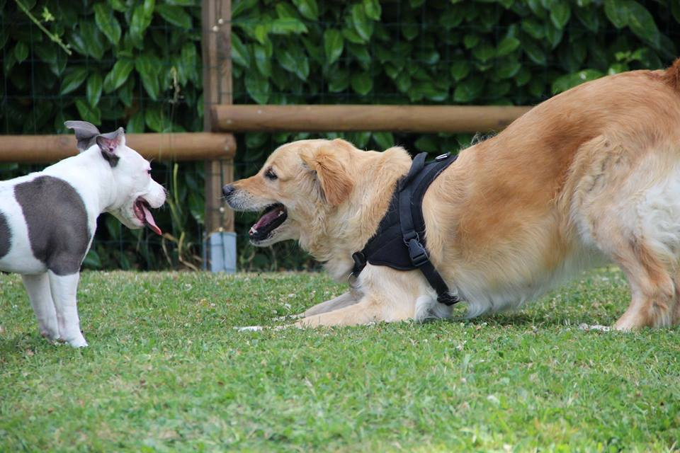 CaniGuide - Education Canine Rennes, dressage chien
