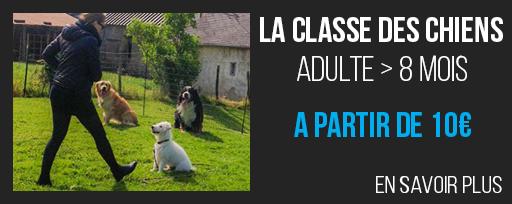 La classe des chiens