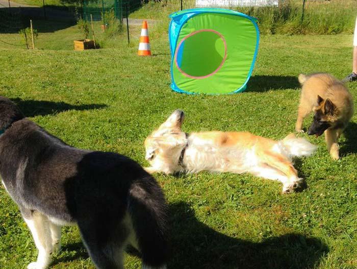 Ecole du chiot - La Récré des chiots | CaniGuide