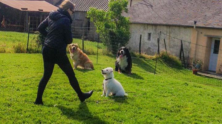 seance-de-groupe-chiens