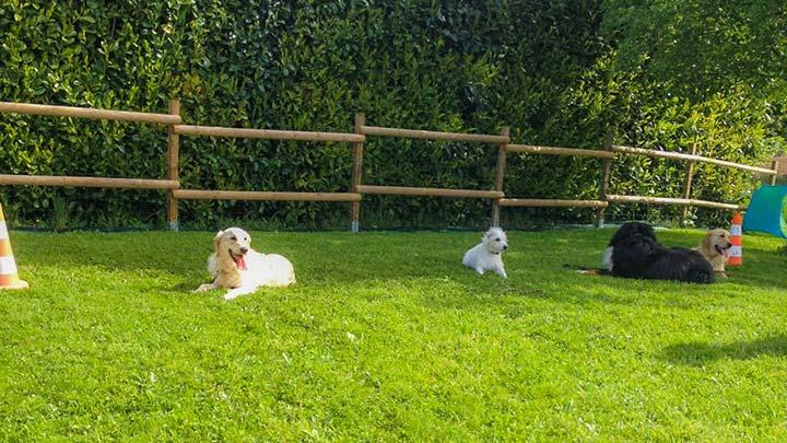 seance-de-groupe-chiens2
