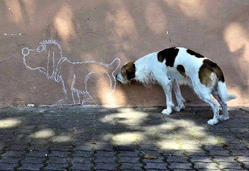 photobomb-chien-renifle