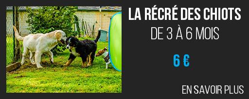 recre-des-chiots-6e